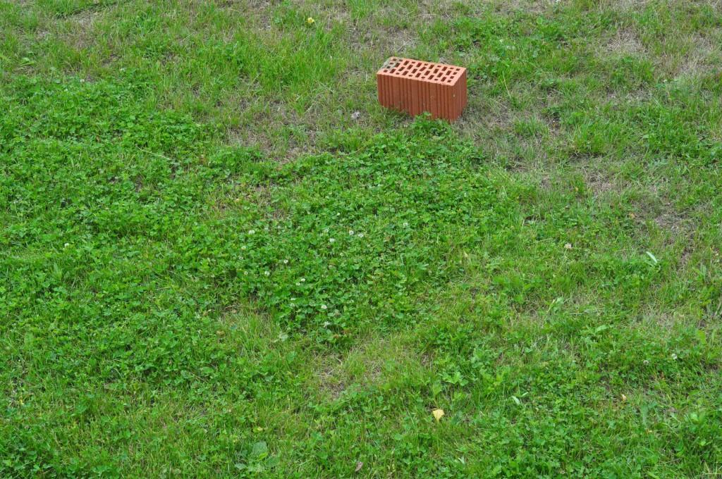 Фото 6.1.1. Трава до прохода газонокосилок