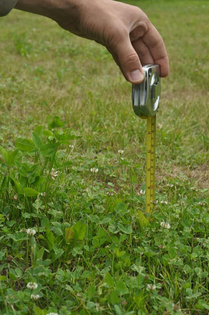 Фото 6.1.1. Высота травы до прохода газонокосилок