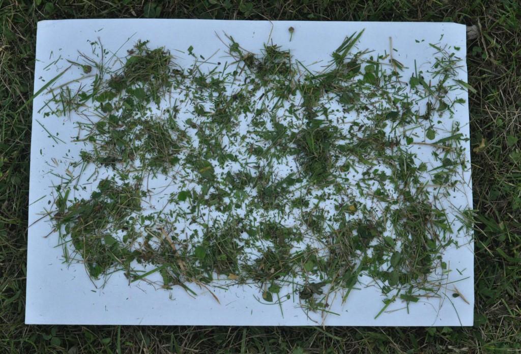 Фото 6.1.4. Фракция скошенной травы после рабочего цикла Robomow