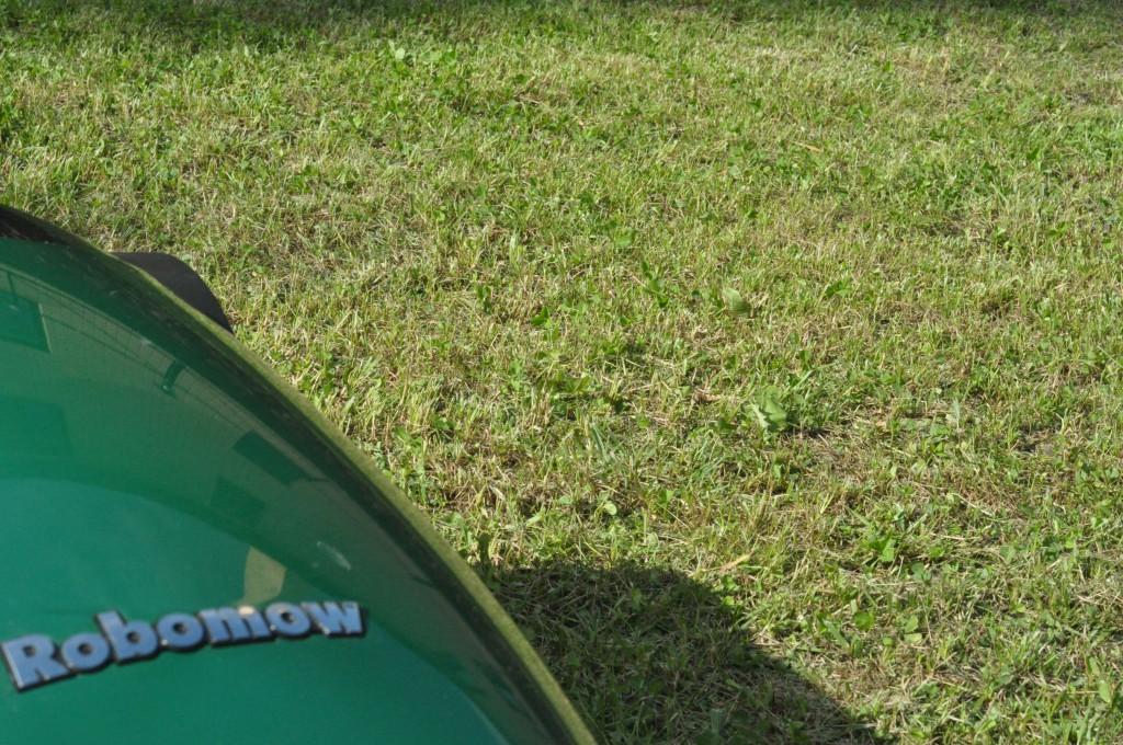 Фото 6.1.4. Газон, выкошенный Robomow, на следующий день, после кошения