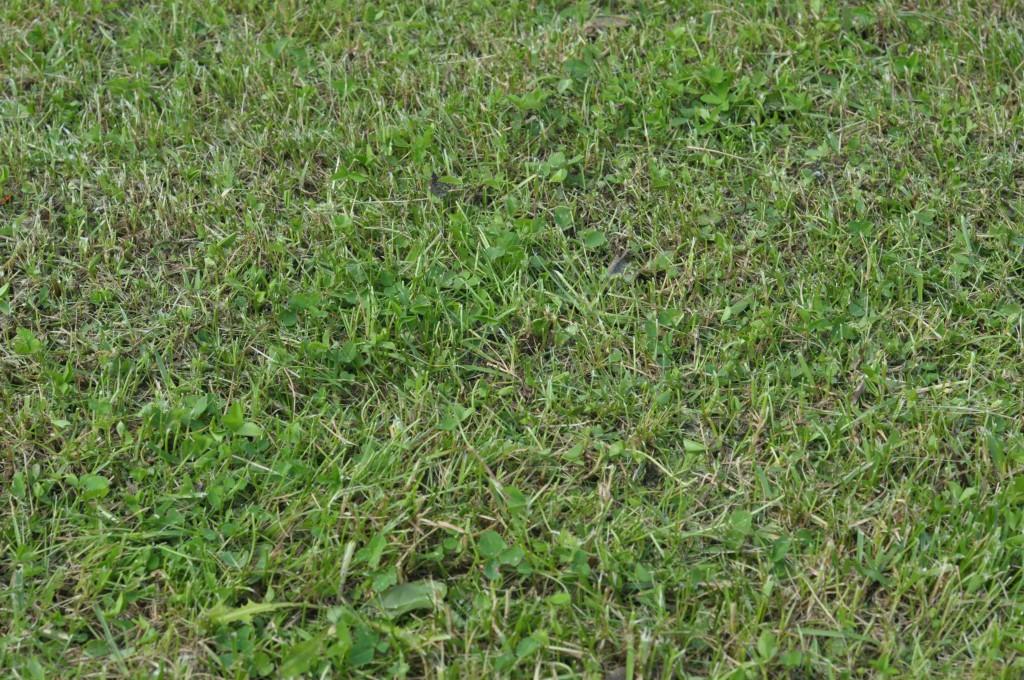 Фото 6.1.4. Практически полное отсутствие сухой травы на следующий день