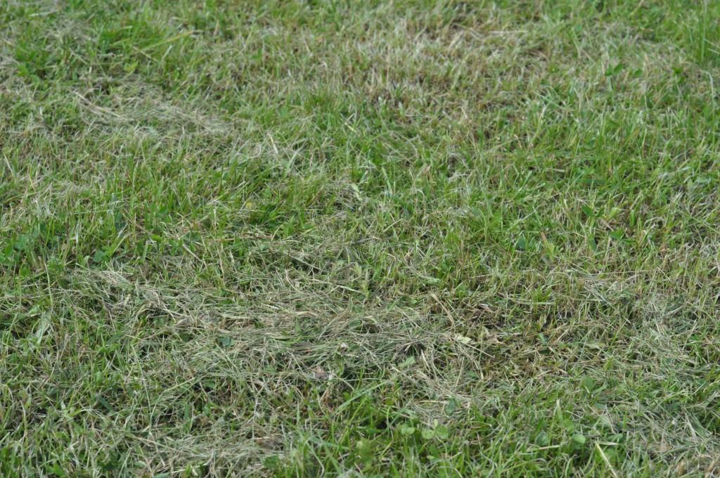 Фото 6.1.5 Срезаная Bosch трава