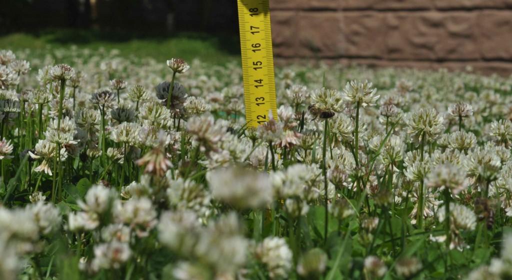 Высота травы чуть больше 10 см